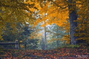 Autumn in Carpathian Forest