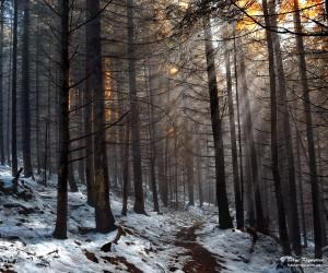 Sunny Day in Prewinter Forest