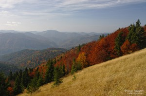 Autumn in Carpathians