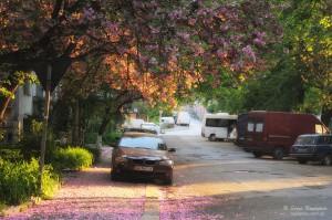 Sakura street's