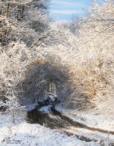Winter in Irdyn marsh